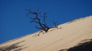Mt. Baldy Tree